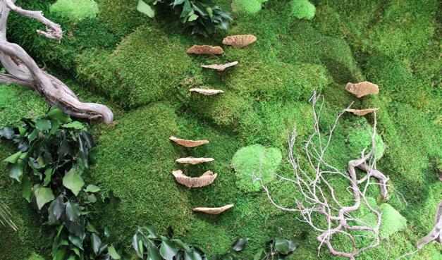 musgo e plantas